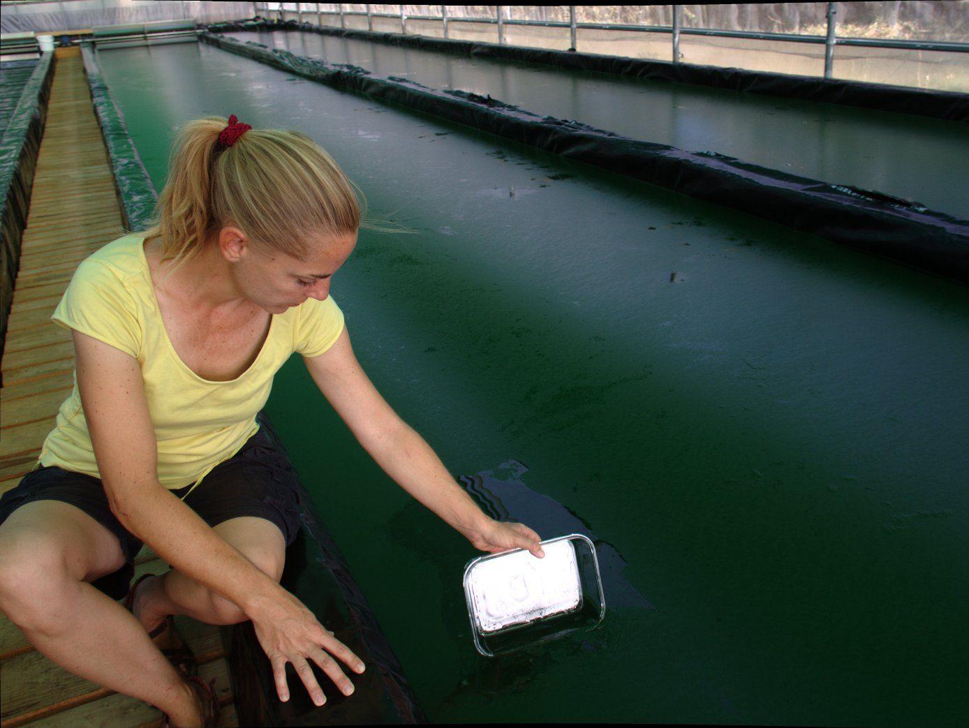 alga espirulina piscinas naturales Ainhoa